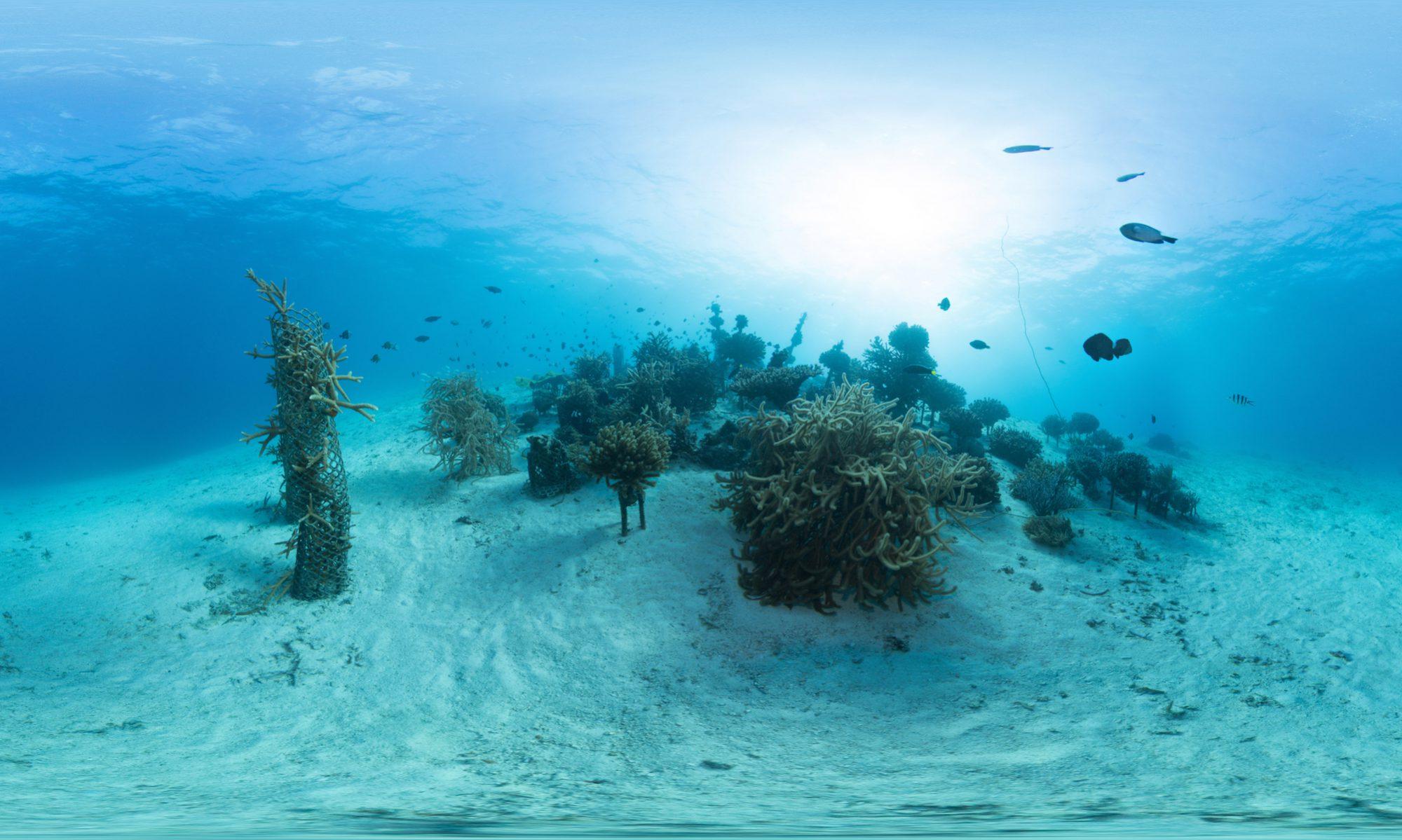 Virtual Reality Diving